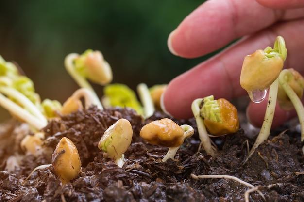 De mensen overhandigt jonge planten water geven het zaaien het groeien op vruchtbare grond voor landbouw in tuin