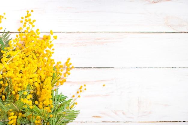 De mimosabloemen op een uitstekende metaalmelk kunnen achtergrond