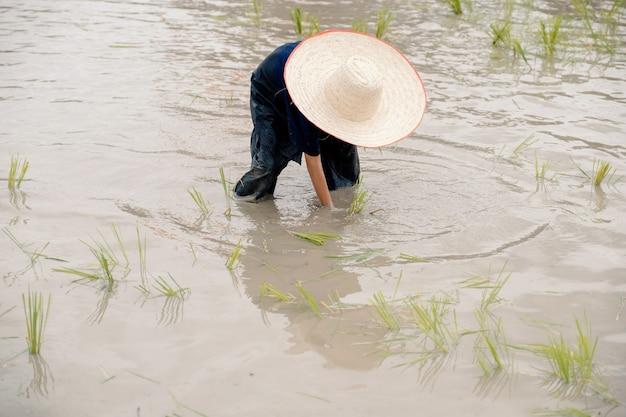 De modderige aziatische jongen met hoed geniet van het planten van rijst in de buitenactiviteiten op de boerderij voor kinderen