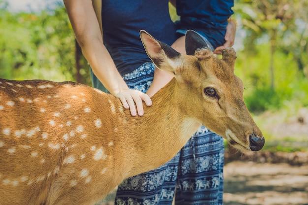De moeder en de zoon die mooi hert voeden van dient een tropische dierentuin in