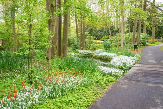 De mooie bloemen van de lentetulpen in park in nederland