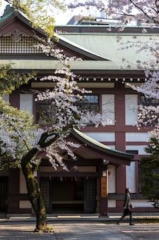 De mooie bloesem van de perzikboom in tokyo