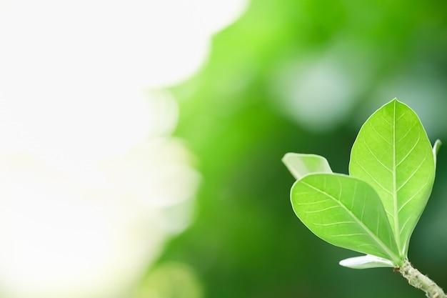 De mooie groene mening van de aardmening op vage groenachtergrond onder zonlicht met bokeh en exemplaar het ruimte gebruiken als achtergrond natuurlijk installatieslandschap, het concept van het ecologiebehang.
