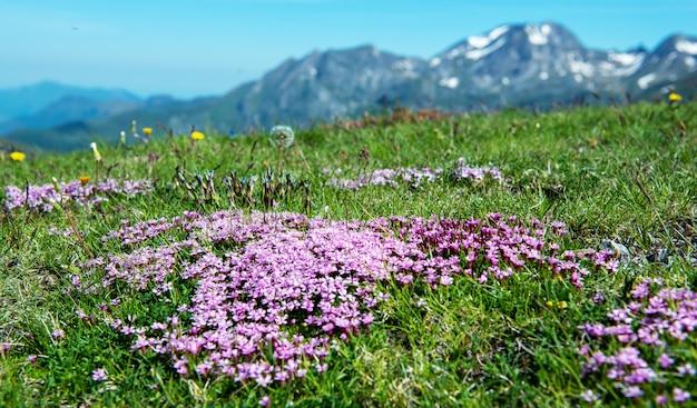 De mooie kleine paarse bloemen in de berg