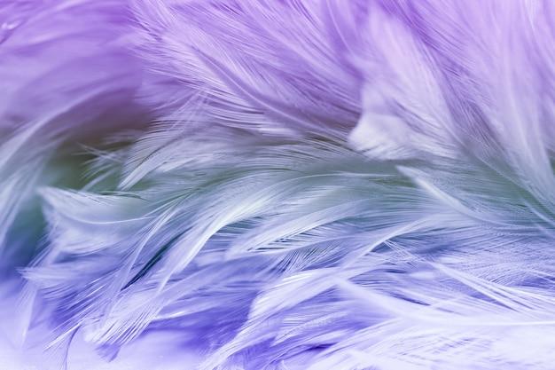 De mooie kleurrijke textuur van kippenveren voor achtergrond