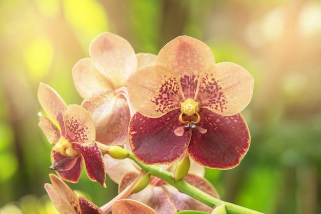 De mooie orchideebloem en de groene achtergrond in de tuin, orchideeën bloeien dicht omhoog.
