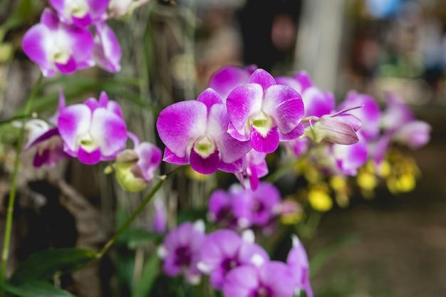 De mooie orchideeën bloeien dicht omhoog
