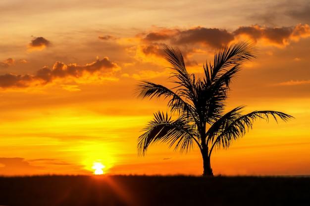 De mooie palm van de silhouetkokosnoot op hemel neary overzees oceaanstrand in zonsondergang of zonsopgangtijd voor vrije tijdsreis en vakantieconcept