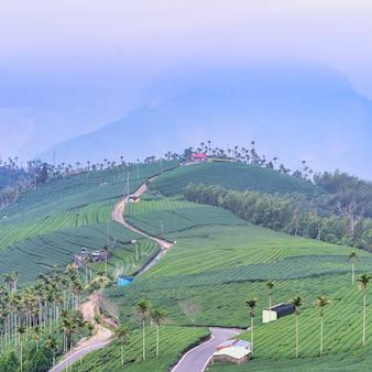 De mooie scène van de de tuinrijen van het groene theegewas met blauwe hemel en wolk, ontwerpconcept voor de achtergrond van het verse theeproduct, exemplaarruimte.