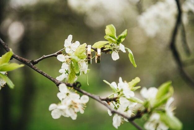 De mooie trouwringen hangen op een tak van een bloeiende boom, het concept van het de lentehuwelijk