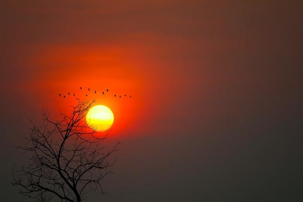 De mooie vogels van het zonsondergangsilhouet vliegen en droge bomen op de donkerrode hemelachtergrond