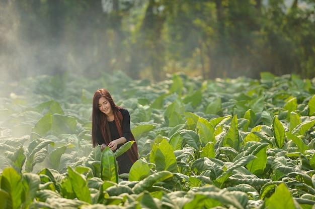De mooie vrouw die in thailand werkt is gelukkig, de vrouw van thailand, de vrouw van thailand, de cultuur van thailand, de buautiful boer van thailand