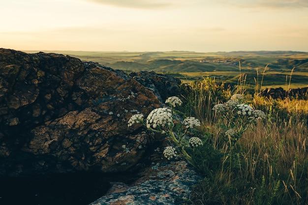 De mooie wilde bloemen groeien in rotsheuvel op zonsonderganghemel.