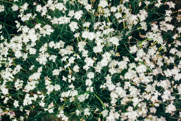 De mooie witte bloemen sluiten omhoog in de tuin