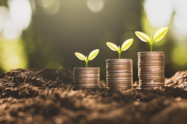 De munten worden op de grond gestapeld en de zaailingen groeien bovenop.
