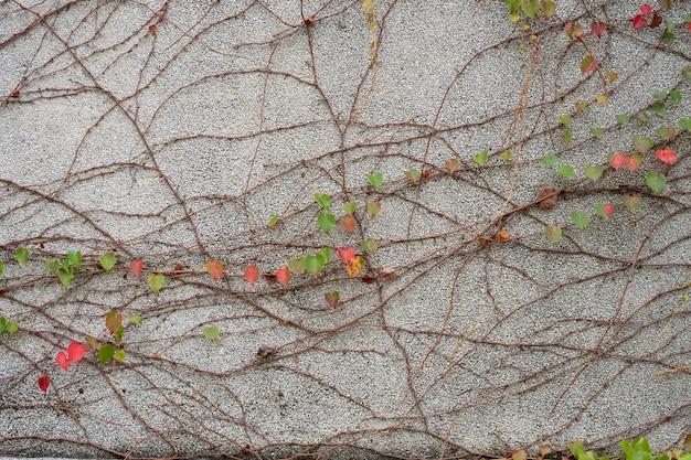De muur is gemaakt van baksteen en vervolgens wit geverfd. er zijn klimplanten op de linkermuur.