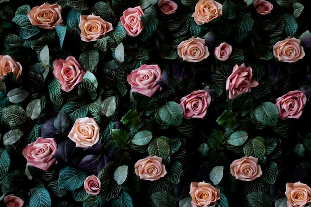 De muurachtergrond van bloemen met verbazende roze en koraalrozen