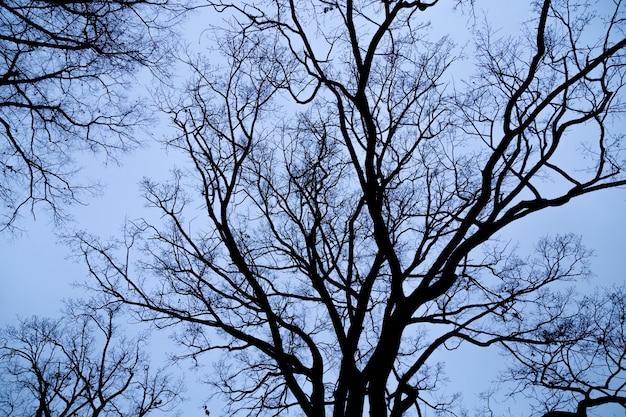 De naakte takken van boom tegen blauwe hemel sluiten omhoog. milieu concept.