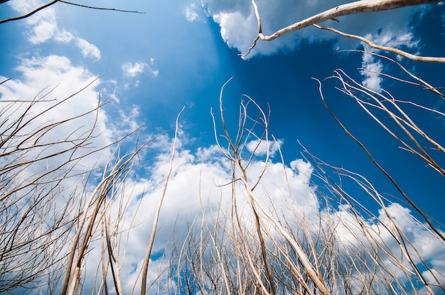 De naakte takken van een boom tegen blauwe hemel sluiten omhoog