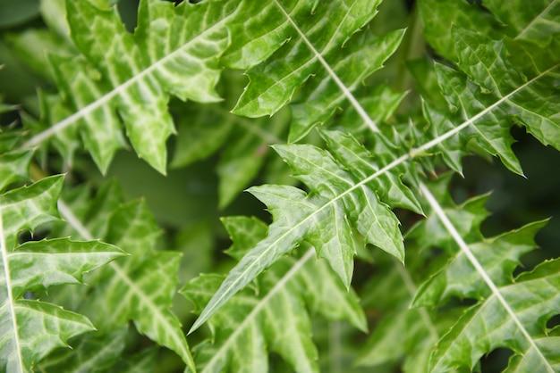 De natuurlijke groene achtergrond van het bladerenpatroon