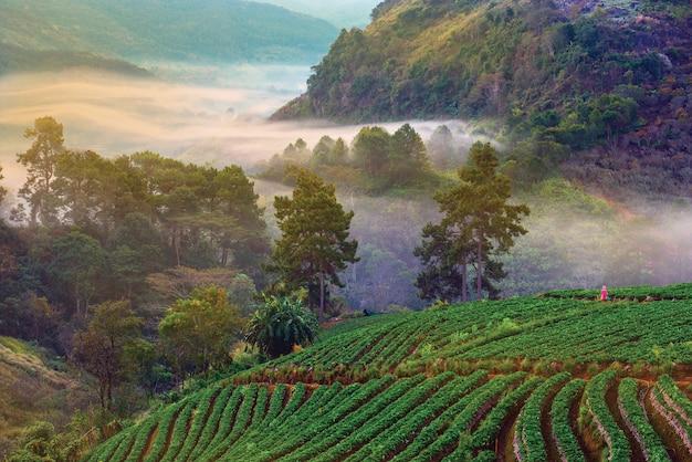 De nevelige zonsopgang van de meningenochtend in aardbeituin, doi angkhang mountain, chiang mai north province, thailand