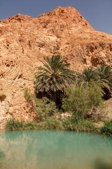 De oase van landschapschebika in de woestijn van de sahara. palmbomen boven het meer