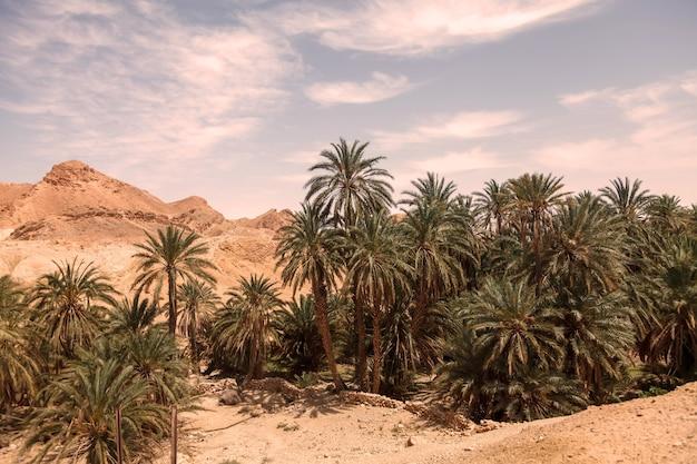 De oase van landschapschebika in de woestijn van de sahara. ruïnes nederzetting en palm