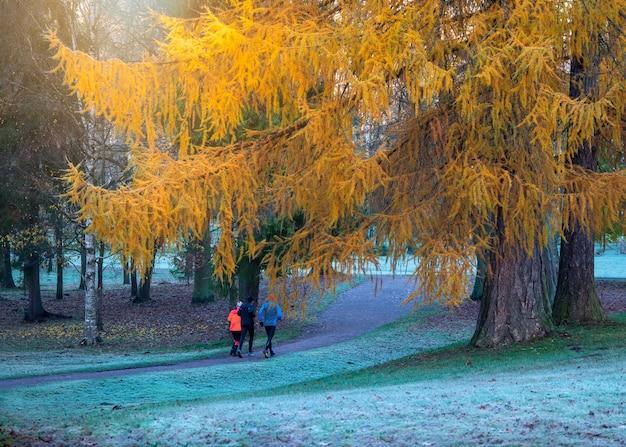 De ochtendnevelig landschap van november met een groep fitnesslopers in het park