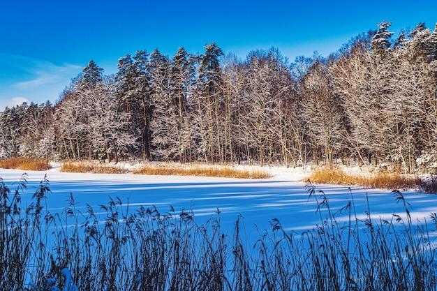 De oever van een bevroren meer in zonlicht