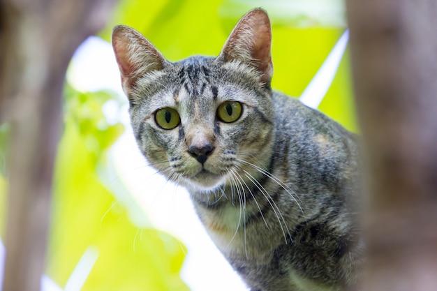 De ogen van de kat kijken je van dichtbij aan.