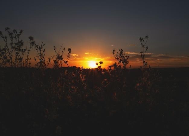 De omtrek van een bloem op een zonnige zomerzonsondergang