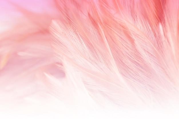 De onduidelijk beeldstyls en de zachte kleur van de textuur van de kippenveer voor achtergrond, vatten kleurrijk samen