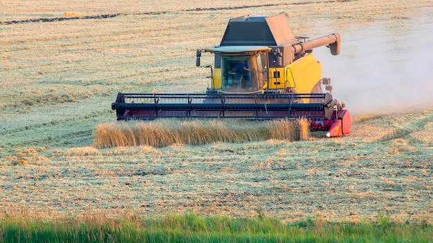 De oogstmachine oogst tarwe in het veld. graan voorbereiding. agronomie en landbouw.