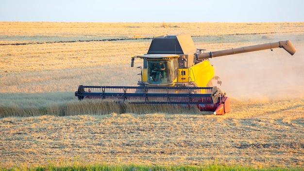 De oogstmachine oogst tarwe in het veld.