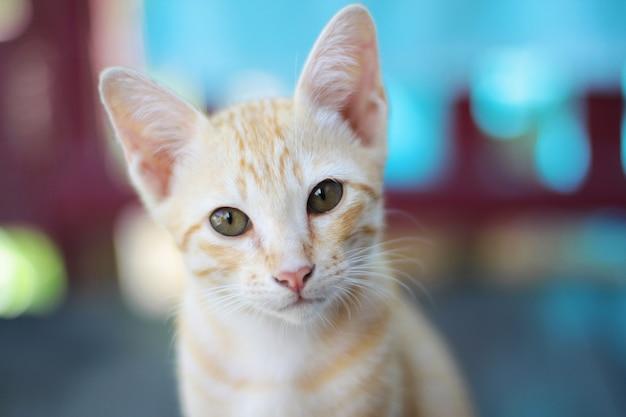 De oranje gestreepte kat van het katje geniet van en ontspant op houten terras met natuurlijk zonlicht