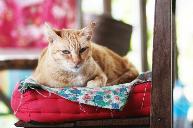 De oranje kat ontspant en zat op de lijst met zonlicht