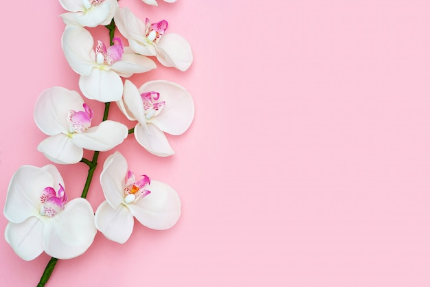 De orchideebloem op een roze achtergrond, ruimte voor een vlakke tekst, legt.