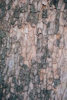 De oude houten achtergrond van de boomtextuur