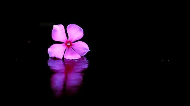 De paarse bloemen geïsoleerd zwarte achtergrond