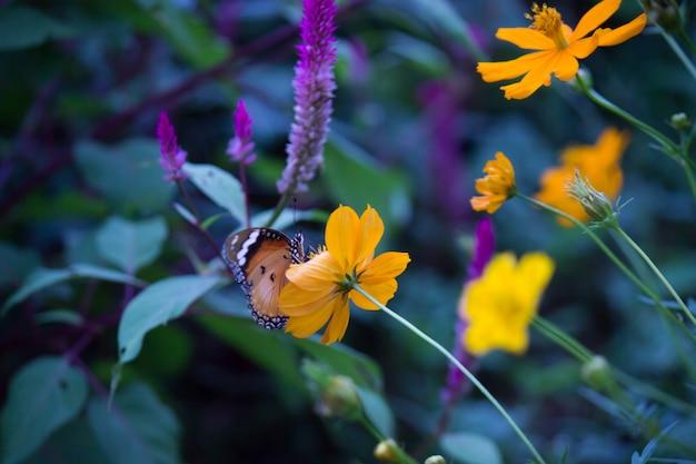 De palin tiger butterfly op de bloem