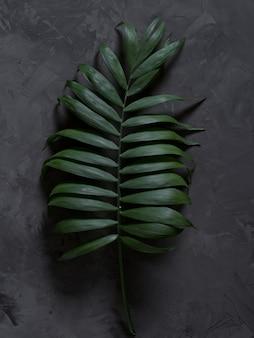 De palm verlaat a op een zwarte achtergrond met en schaduwen.