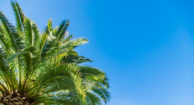 De palmen sluiten omhoog op hemel. selectieve aandacht.