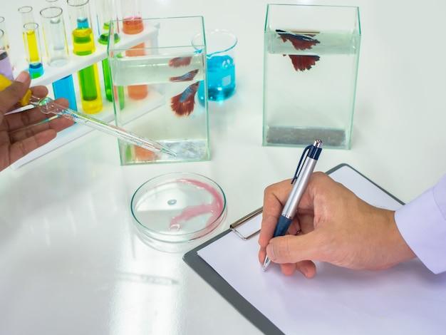 De pen van het de handgebruik van de wetenschap om testresultaat dichtbij battavissen te registreren die in vissentank zwemmen.