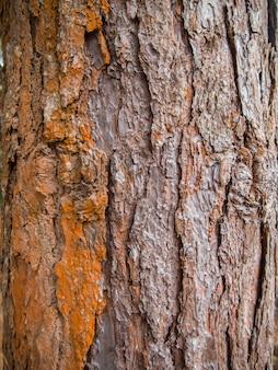 De pijnboomschors van de close-up op boom in aard
