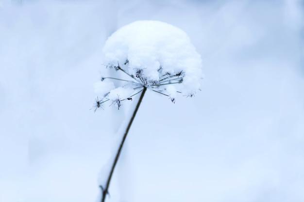 De planten in het park zijn bedekt met vorst en sneeuw koude textuur van het glazuur