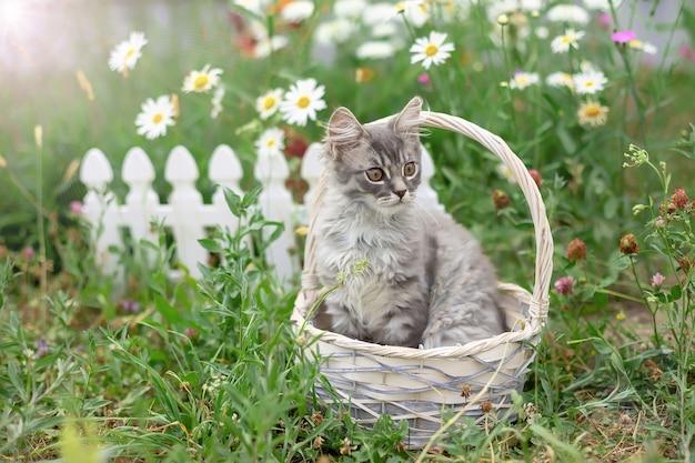 De pluizige grijze kat zit in rieten mand in de zomertuin