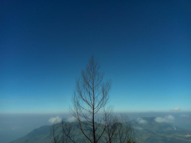 De prachtige boom in het bergnatuurlandschap