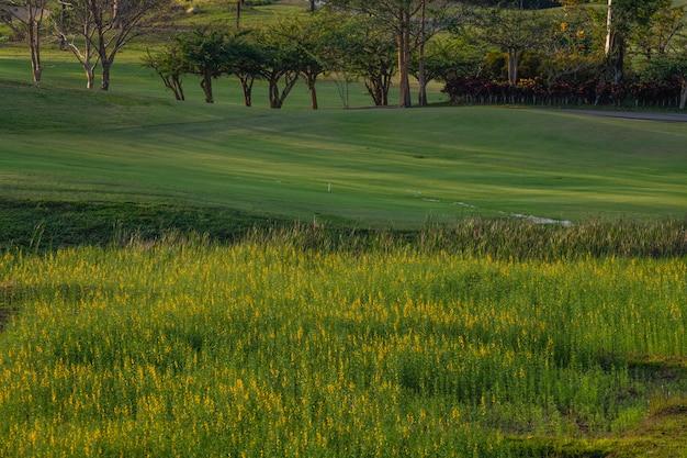 De prachtige golfbaan, zandbunker en groene grasachtergrond.