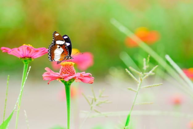 De prachtige vlinder op de bloemen in de tuin.