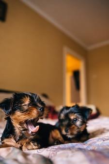 De puppy's op het bed